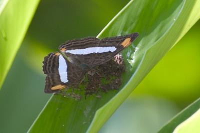 Butterfly 822_2222