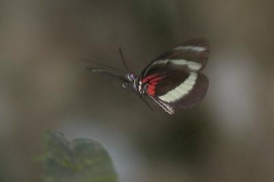 Butterfly 825_2596