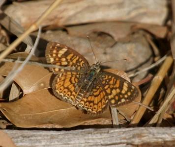 crescent Big Bend National Park TX 147_4774