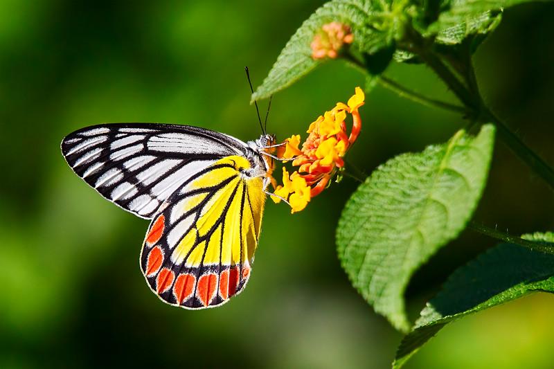 Drinking the Nectar Gold / Вкушая золотой нектар