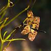Woven of Golden Rays / Соткана из золотых лучей