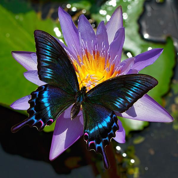 A Winged Gem / Крылатый самоцвет