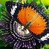 The Red Lacewing - Cethosia biblis / Златоглазка Библис