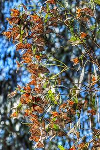 Butterflies 28