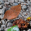 Kallima Butterfly - A Magic Transformation (1) or The Dry Leaf / Бабочка каллима - Магическое превращение (1) или Сухой лист