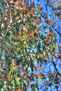 Butterflies 18