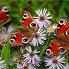 Butterfly Paradise / Бабочковый рай