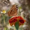 The World of Butterflies / Мир мотыльков