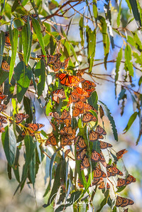 Butterflies 14