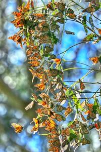 Butterflies 27