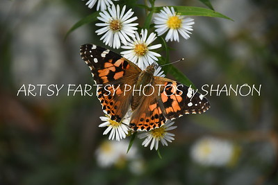 orange butterfly white flower angle