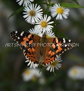 orange butterfly white flower