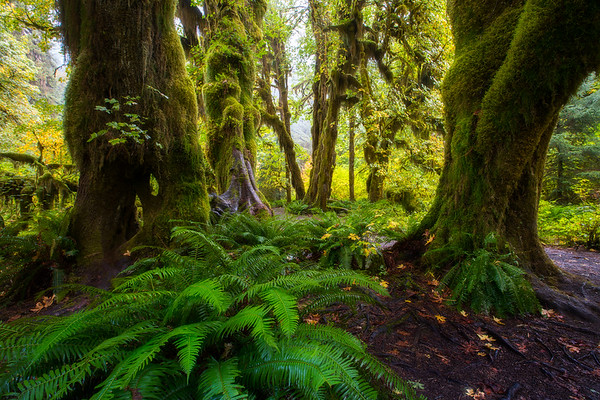 Hoh Rainforest - Washington