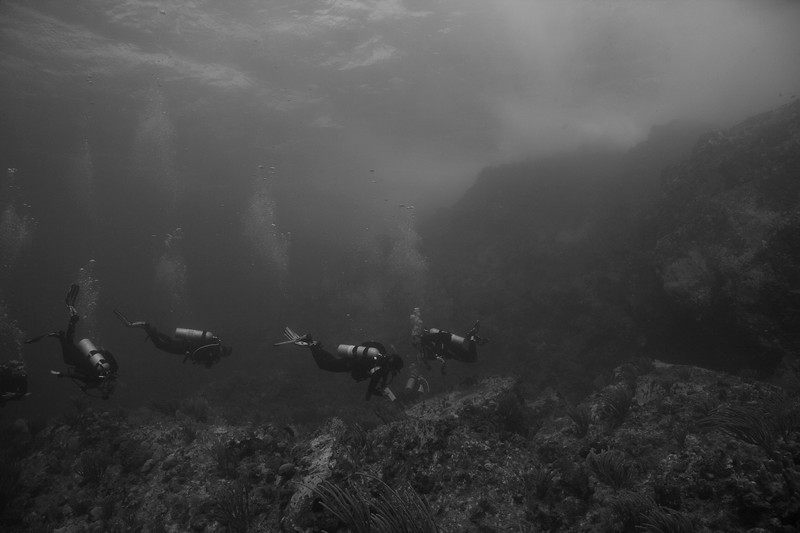 Carvel Rock - black and white divers