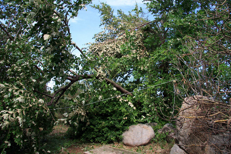 Toppled tree outside the house