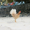 Even the chickens like the beach