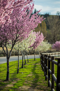 The entrance to the Bear Valley Springs Equestrian Center, with the trees in full spring bloom