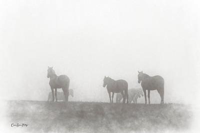 Fog Silhouettes 2