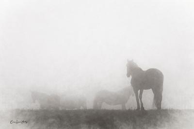 Fog Silhouettes 1