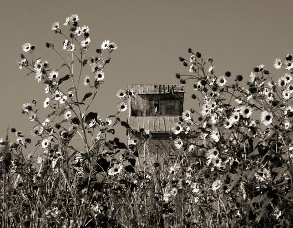 Sunflowers & Elevator