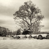 Snow covered Haybales