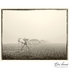 Foggy Morning Cornfield
