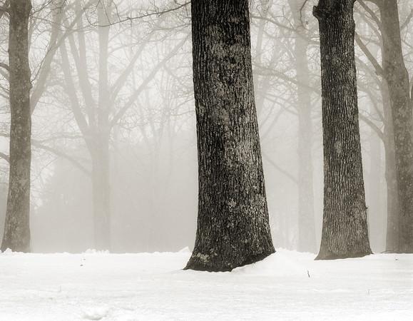 Fog/Trees