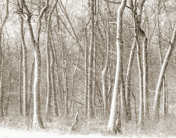 Winter Morning Snowshower