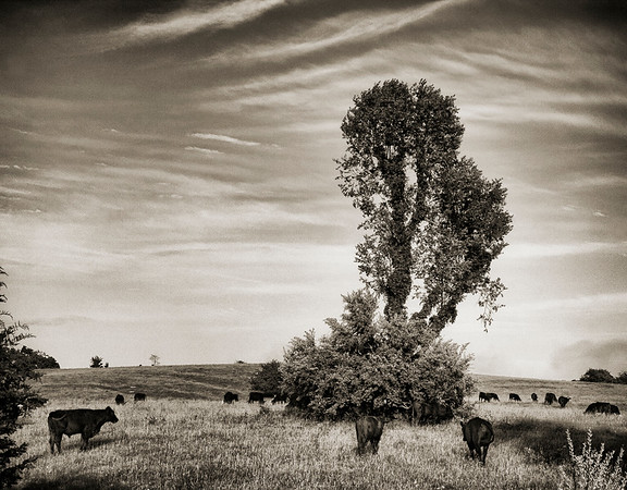 Grazing Tree