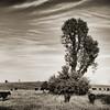 Grazing Tree