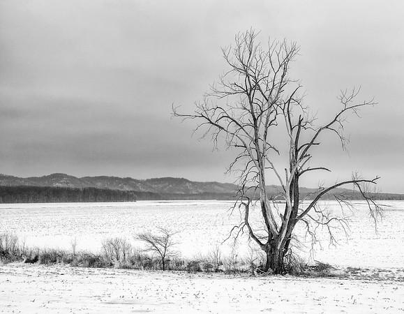 Gnarly Tree _ LaRue-Pine Hills