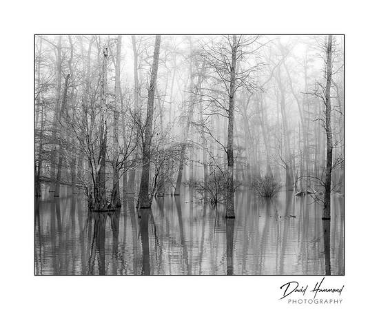Foggy Horseshoe Lake