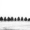 Tree Row - Winter