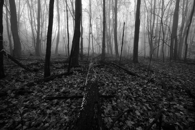 Fallen Tree - Rowe Woods