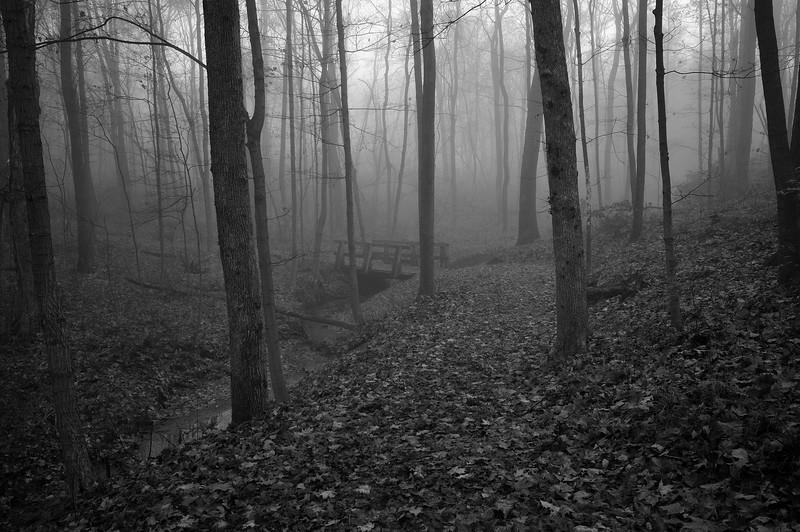 Woodland Trail Bridge - Rowe Woods - Cincinnati Nature Center