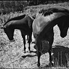 Shy Horses