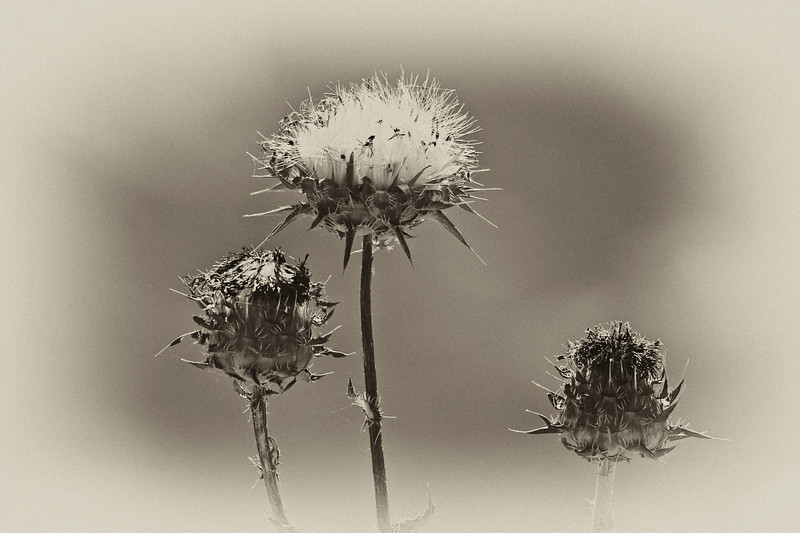 DelValle Flowers