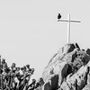 Crows and Crosses