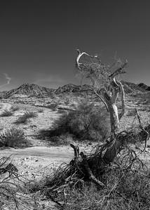 Mummified Tree