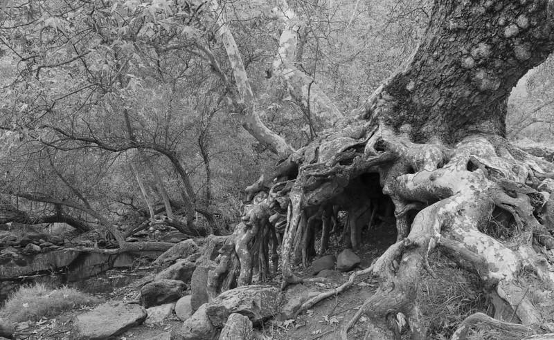 Malibu Creek SP