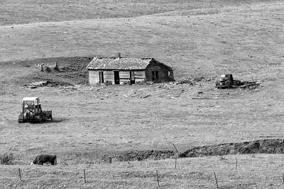 A Cabin, A Cow, A Bulldozer & A Truck