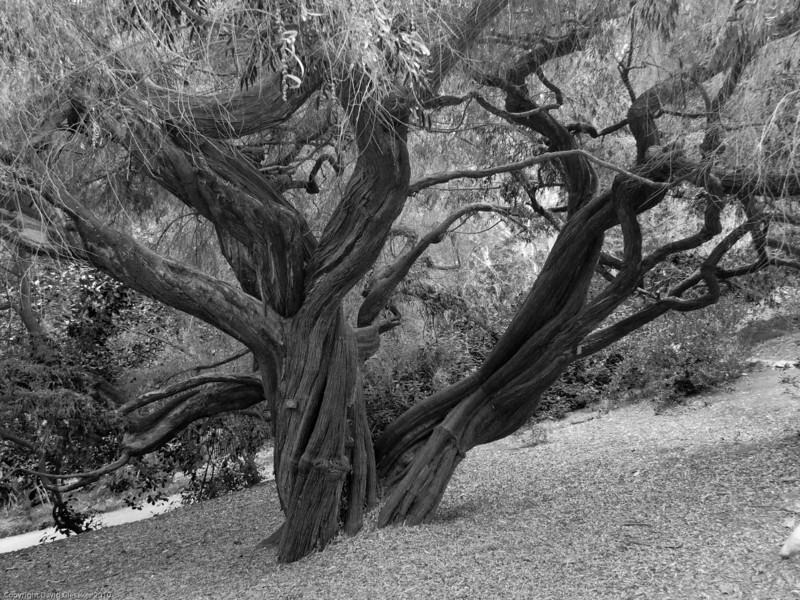 UCLA Garden