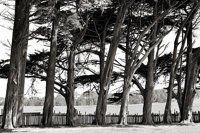 Cedars & Fence- Manchester, CA
