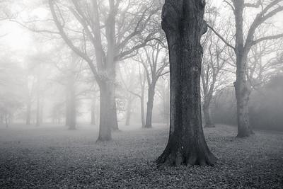 Foggy Hagley Park