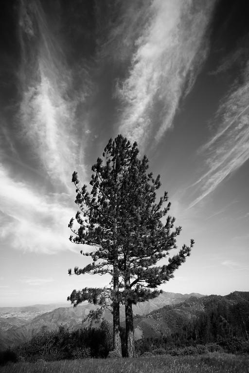Tree Paintbrush