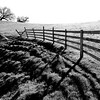 Curved Fence- Marshall Road, CA
