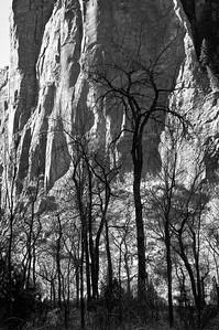 Cottonwoods- Zion, UT