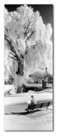 Infrared B&W panorama