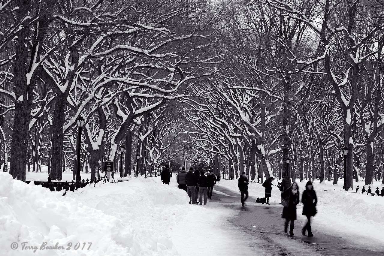 The Mall and Literary Walk<br /> Central Park, New York City