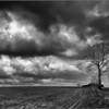 Solitaire boom in een prachtig gebied tussen Bertem en Leefdaal